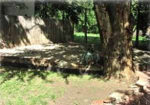 East backyard has grass and raised area AND tall cottonwood trees.